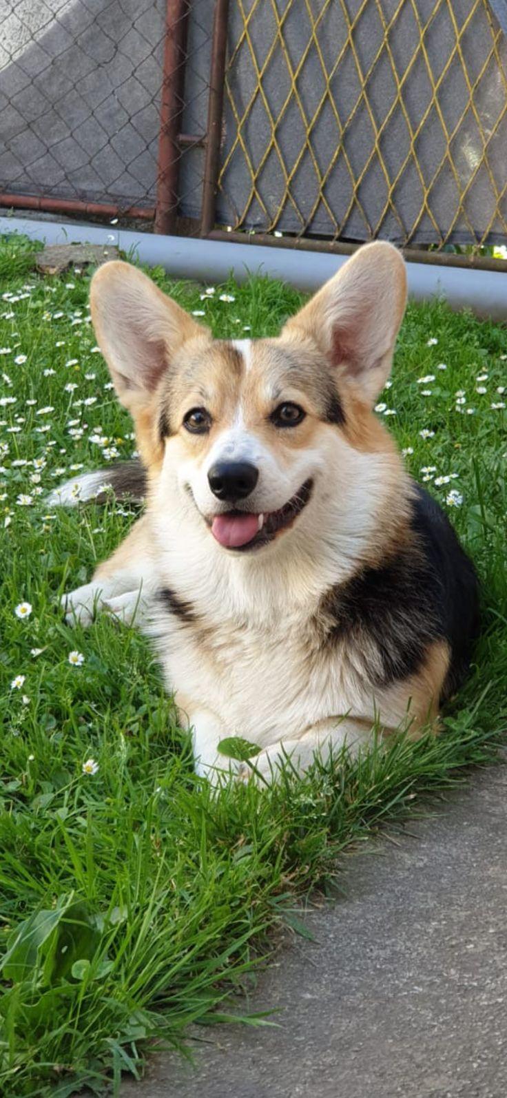 Cute DogCute DogsCute DogsCute
