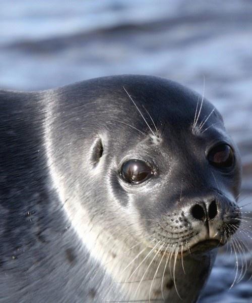 Mejores 34 imágenes de Mamíferos marinos de Europa en Pinterest | De ...