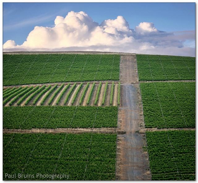 Beeeeeeeauuuutiful - Durbanville  #winelands #southafrica #Durbanville #iLoveDurbanville