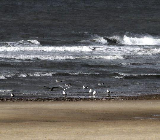Il Mare del Nord – roberto falcione