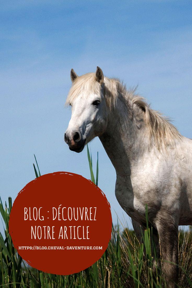 f7609f0f9d2 Partez pour la Camargue à la découverte de ce petit cheval blanc polyvalent  et ami des gardians.  chevaldaventure  cheval …