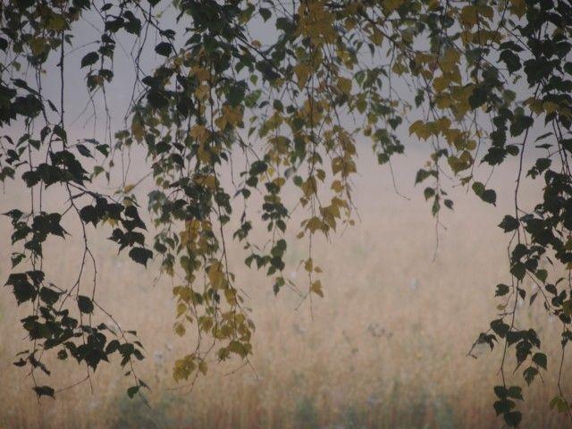 luonto kuvaaminen - Vuodatus.net