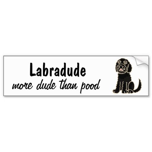Funny Labradoodle Bumper Sticker #labradoodles #dogs #pets #funny #animals  #bumperstickers #zazzle #petspower