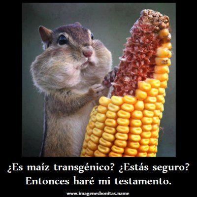 Para Facebook Maiz Transgenico Imagenes Con Frases Pelautscom