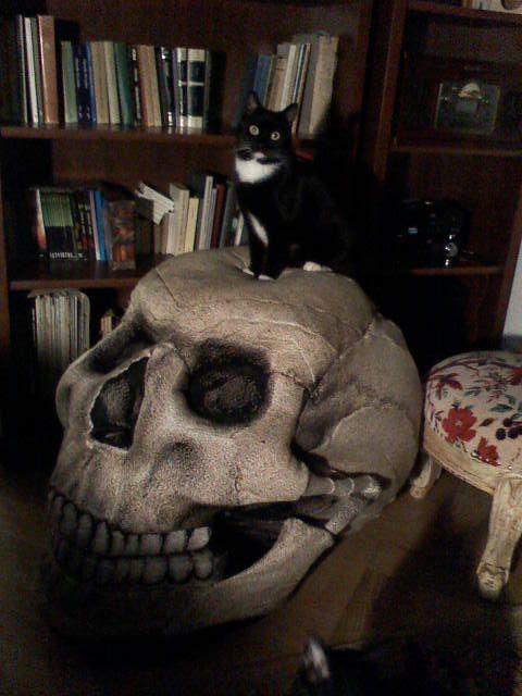 Mascota on the skull chair :)