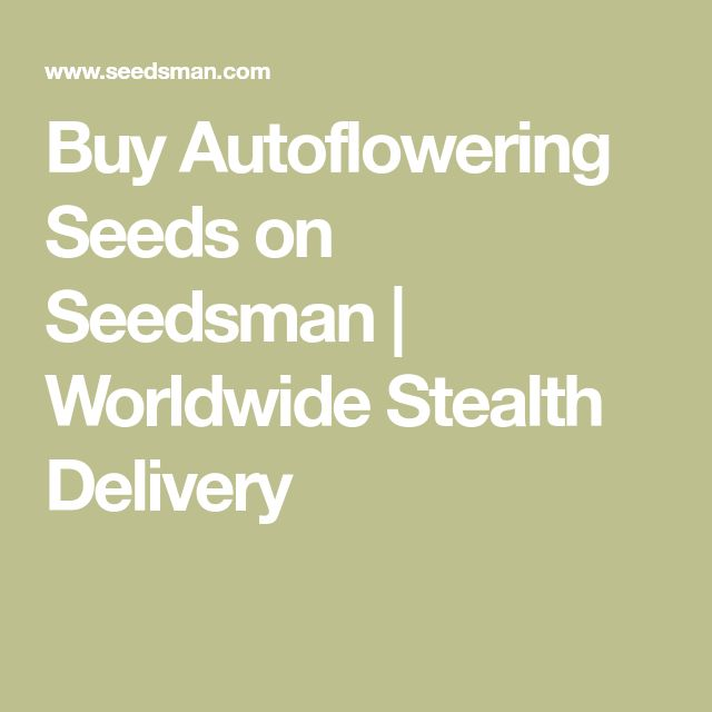 Buy Autoflowering Seeds on Seedsman | Worldwide Stealth Delivery
