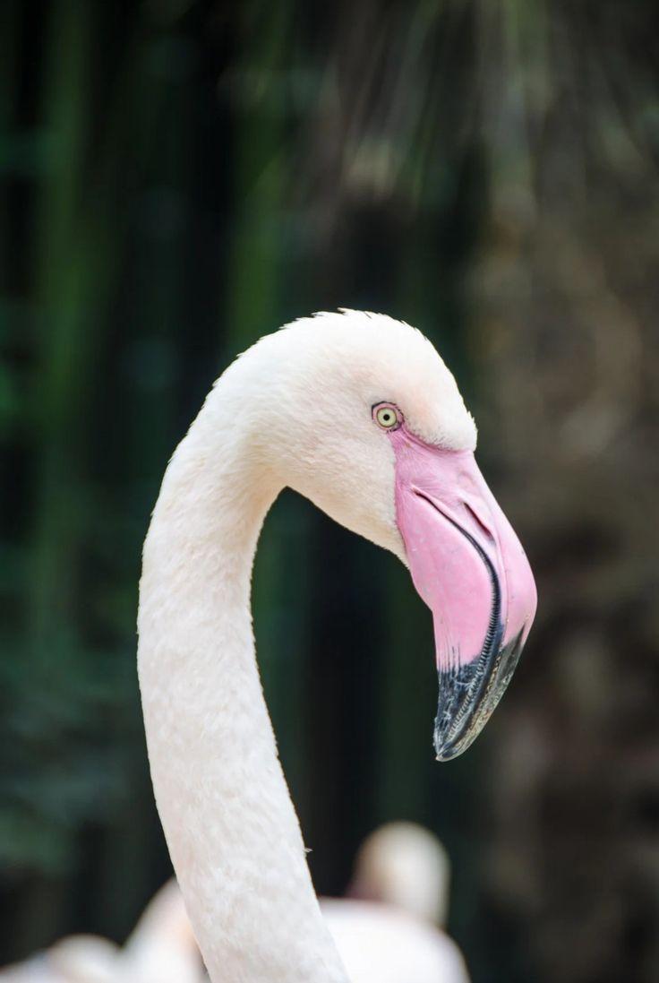 Flamingo flamingo pictures bird pictures cat pet supplies