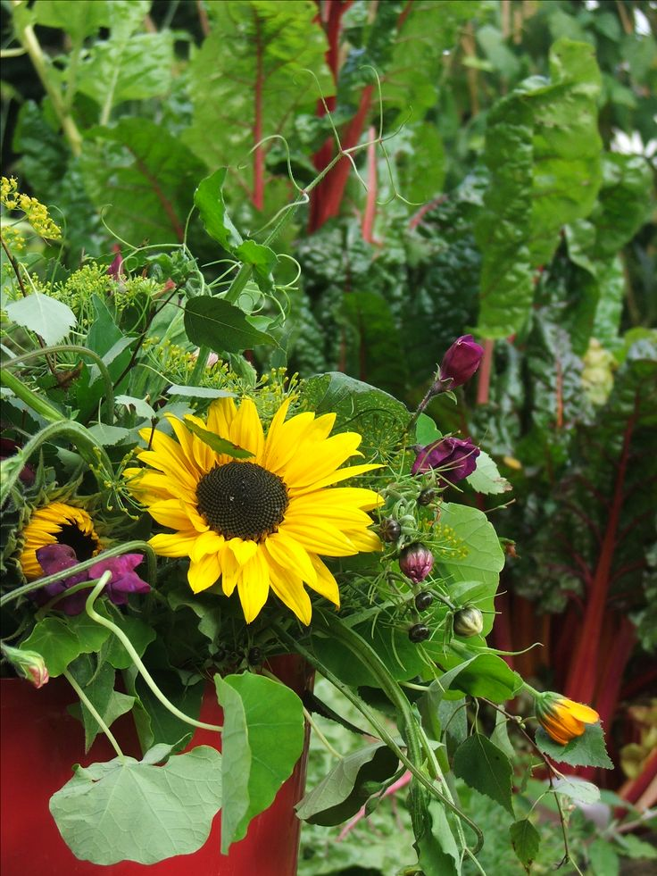 Last bunches of the season, late September