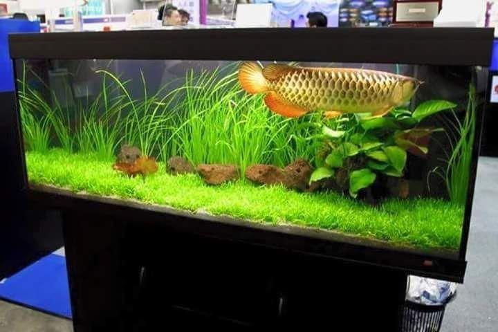 Pin By Johnny Williamson On Freshwater Aquariums Aquarium