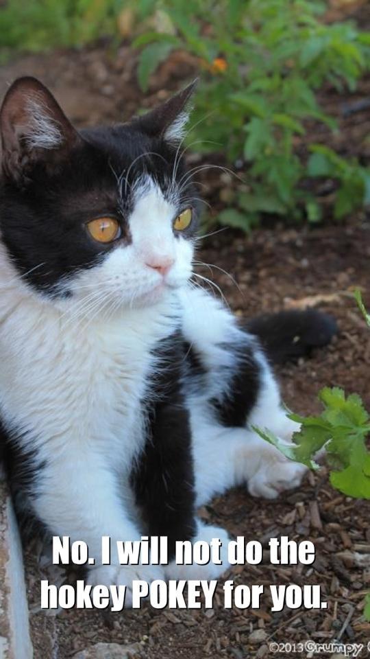 Grumpy Cat And Pokey Videos