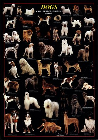 Different Dog Breeds Poster