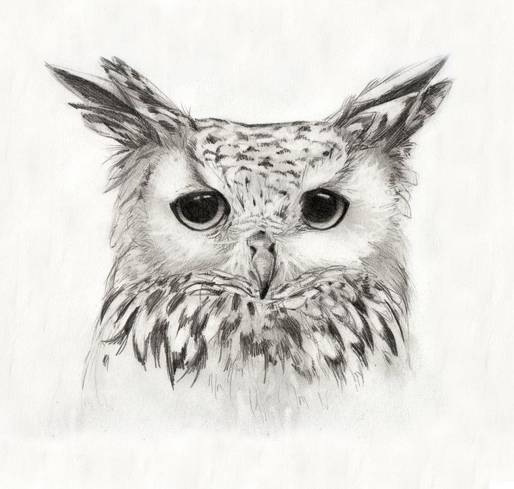 Best 20 owl print ideas on pinterest owl art owl for Draw the owl