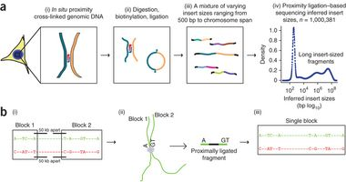 Whole-genome haplotype reconstruction using proximity-ligation and shotgun sequencing