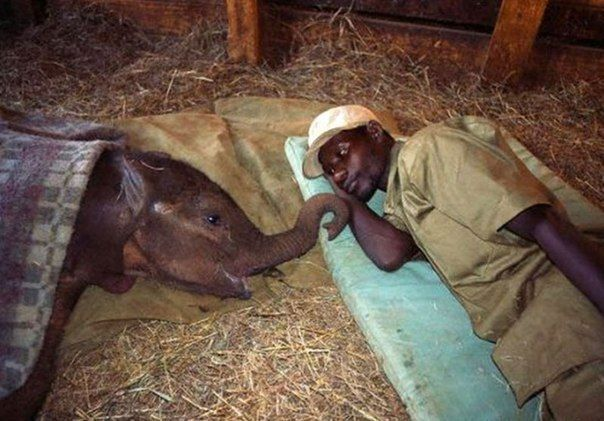 The David Sheldrick Wildlife Trust in Kenya. The mothers of these orphaned elephants were killed by poachers for their ivory tusks, leaving behind babies who are milk-dependent for 3 years.