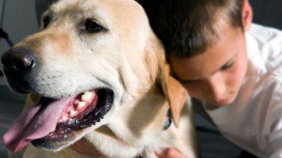 Er worden de laatste tijd veel meer huisdieren behandeld voor kanker. Dit komt omdat de mensen meer waarde hechten aan de gezondheid van het dier. Dit zegt dierenarts Ruth Fortrie.