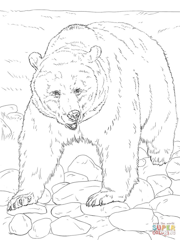 Realistic Grizzly Bear coloring page Free Printable