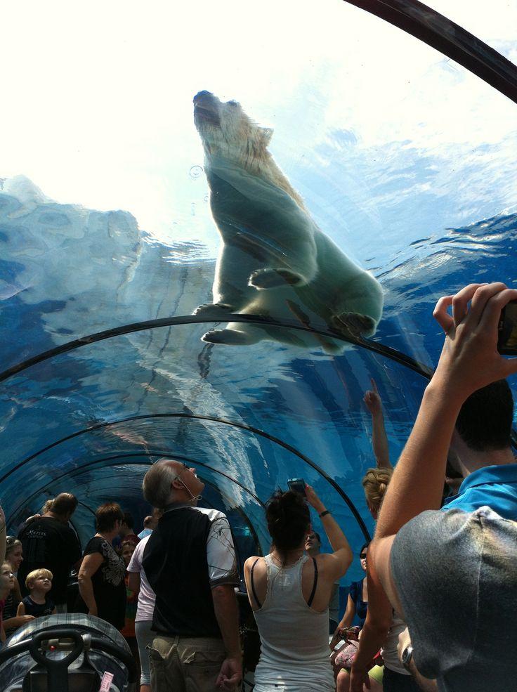 The Detroit Zoo polar bear exhibit.