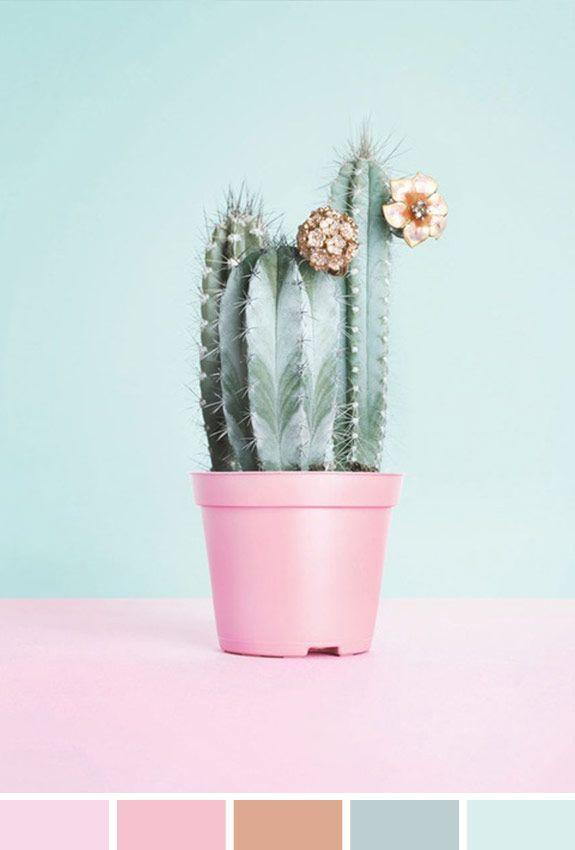 Inspiração do Dia | Flor Cactus - http://www.achadosdabia.com.br