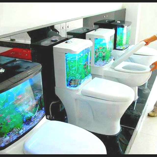 1000 images about toilet related things on pinterest for Floor fish tank