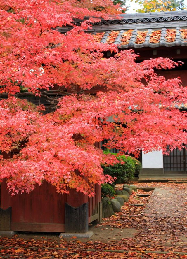 Gōtoku-ji (豪徳寺), Setagaya