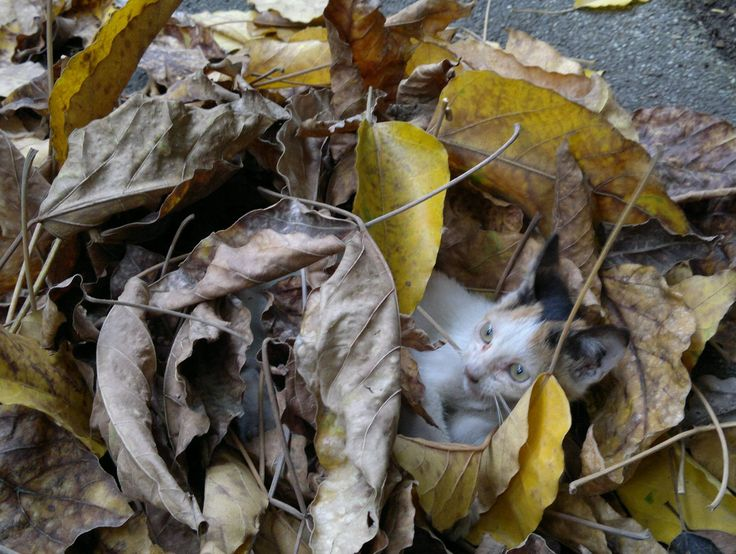 covered with leaves  #pets  #cats