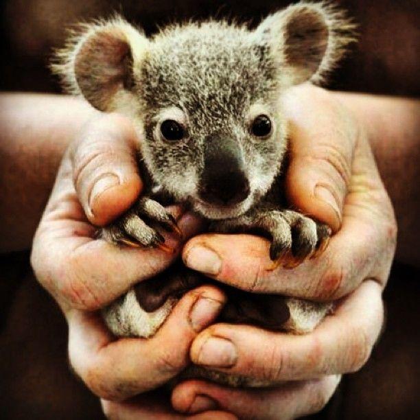 Australia has cute things too!