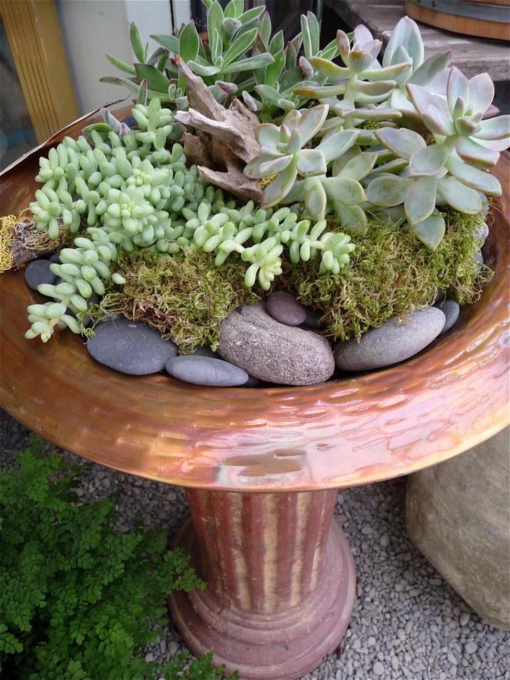 Potting Shed Fairfax 17 Best Images About Succulent