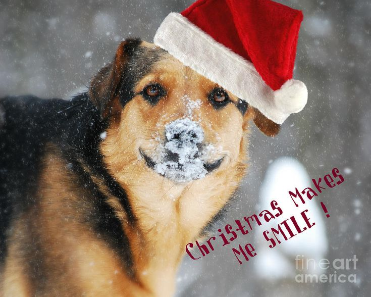 153 best Pets At Christmas images on Pinterest | Christmas dog ...