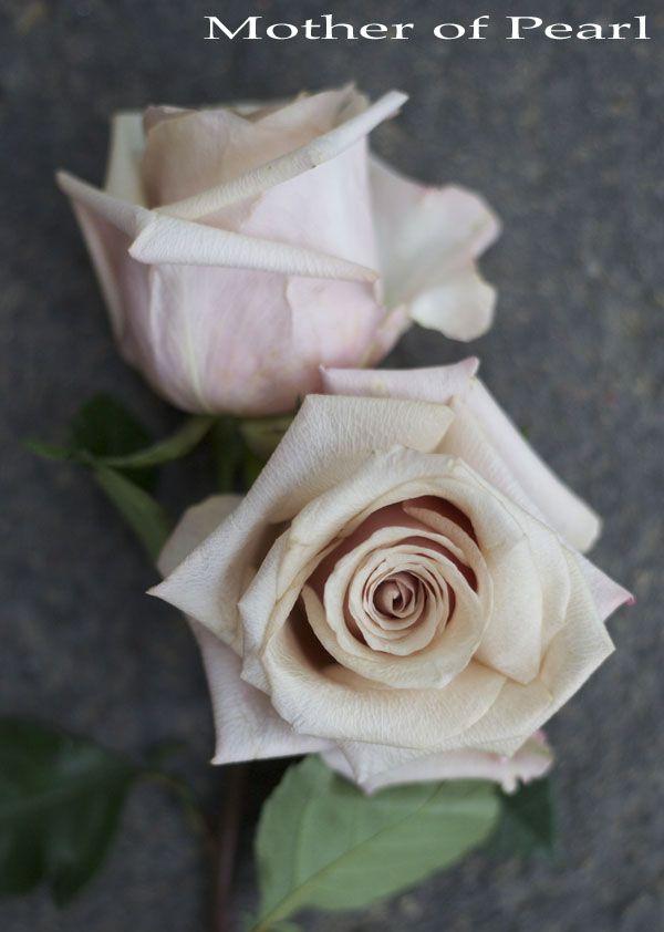 Mother of Pearl - Blush Rose http://www.harvestwholesale.com