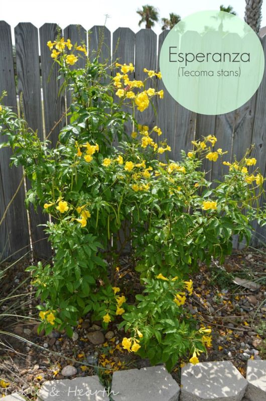 A great list of native Texas plants to use in various landscaping conditions to help conserve water