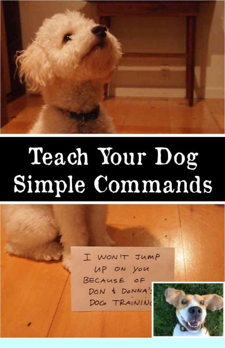 Puppy Training Basics Youtube #dogtraining and Dog Obedience