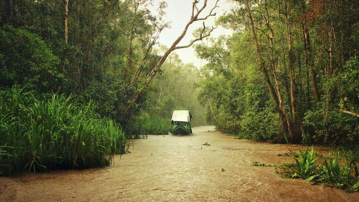 River cruising in the Borneo rainforest.  www.orangutan-ecotour.com
