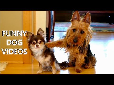 *Try Not To Laugh Challenge* Funny Dogs Compilation - Funniest Dog Videos 2017 - YouTube