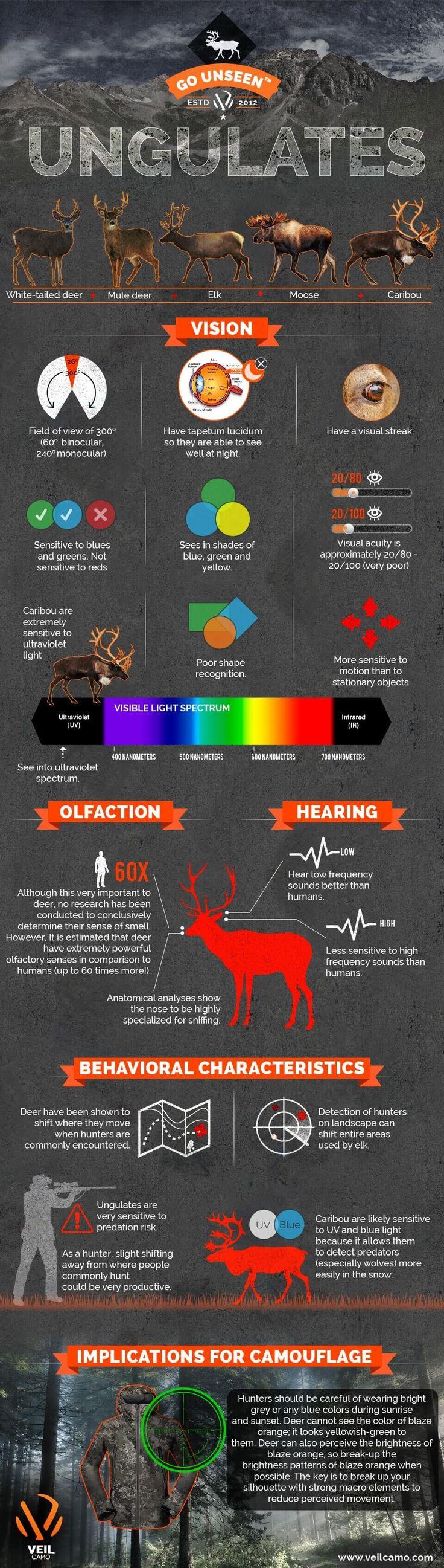 HUNTING UNGULATES( White-tailed Deer, Mule Deer, Elk, Moose, Caribou)