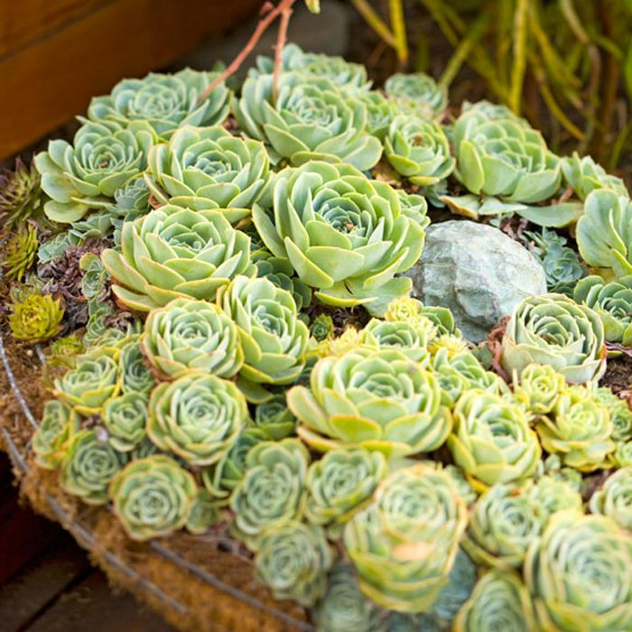 Check this out! Lowe's shares all the best practices for growing and showcasing your summer succulents from crafting a way to bring them eye level to using them for home curb appeal.