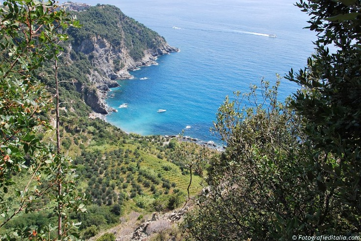 Photos from Italy | Immagini Italia - Landscape from Cinque Terre - Liguria
