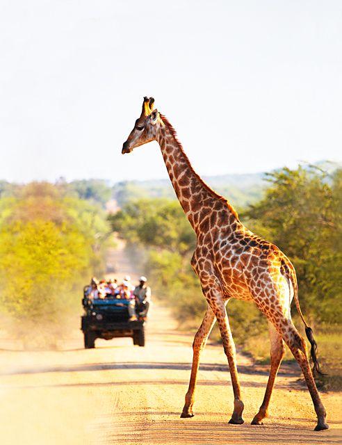 Safari jeep, South Africa.