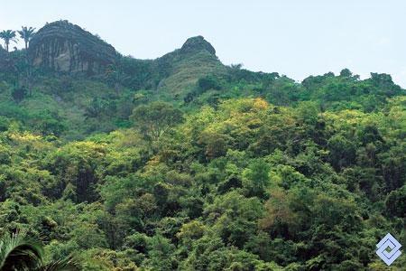 Remanente de bosque seco en el municipo de Piedras en el sector de Camao, departamento del Tolima, Colombia  Fotógrafo: Fredy Gómez Suescún