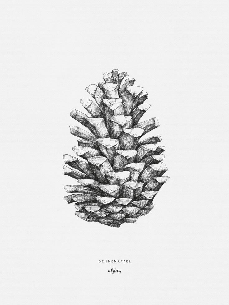 Hand drawn illustration of a pinecone by inkylines. The pine cone is a symbol of growth.