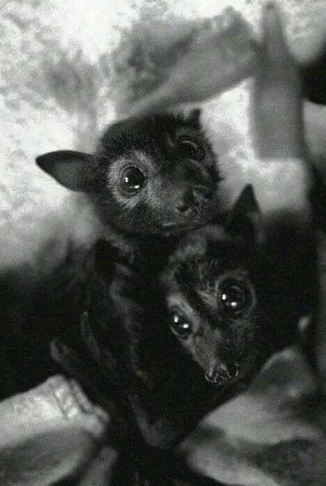 Bats are so very beneficial to our ecosystem. They are not scary monsters. Look at these precious lil ones. ....