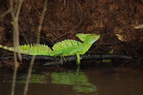 Cano Negro Wildlife Refuge Costa Rica tours