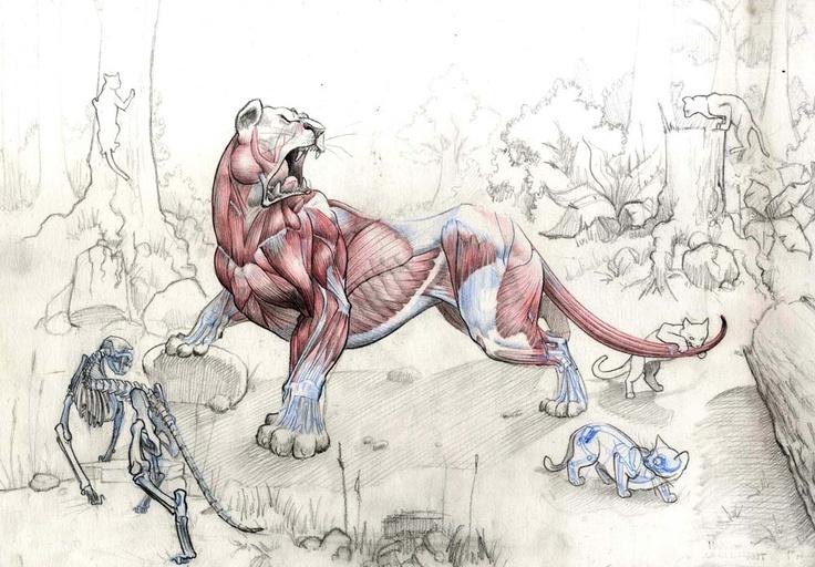 Feline anatomie