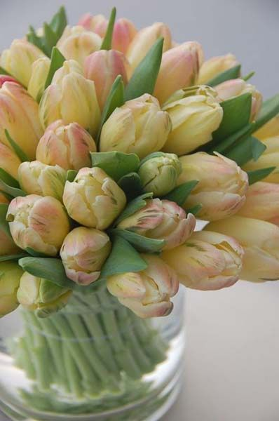Tulips delivered virtually for us... :)  Aline ♥