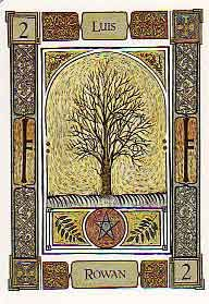The Celtic Tree Oracle by Liz and Colin Murray. My birth tree.