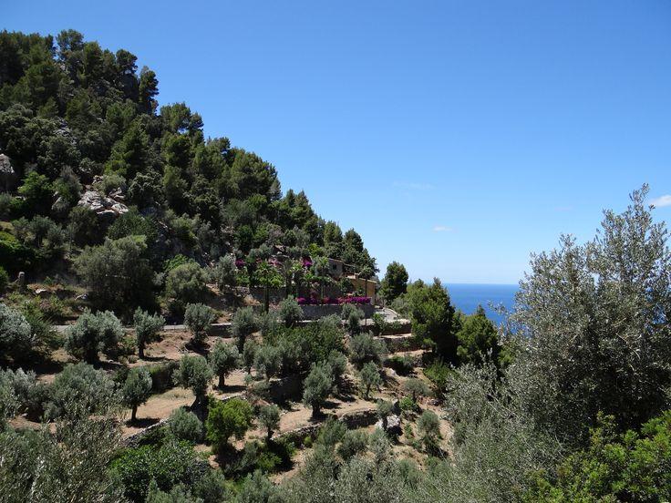 Mallorca. Summer Vacation 2016