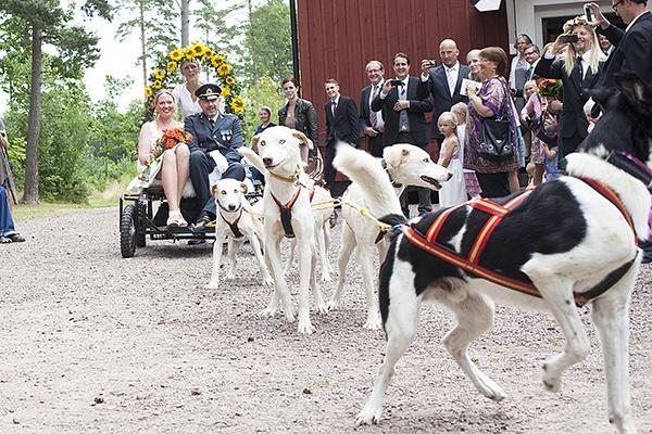 Annorlunda Bröllopskortege: Hundspann!