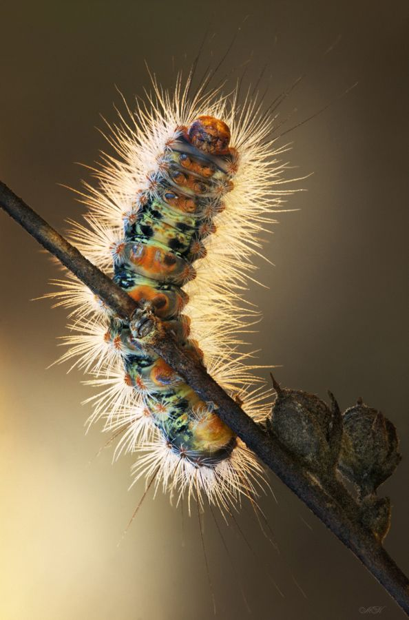 Macro Photography by Miron Karlinsky