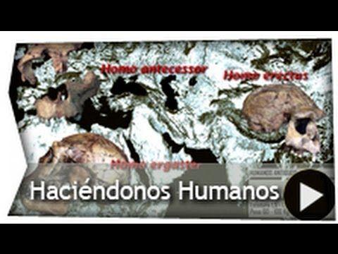 Haciéndonos Humanos. La evolución humana en 4 minutos.