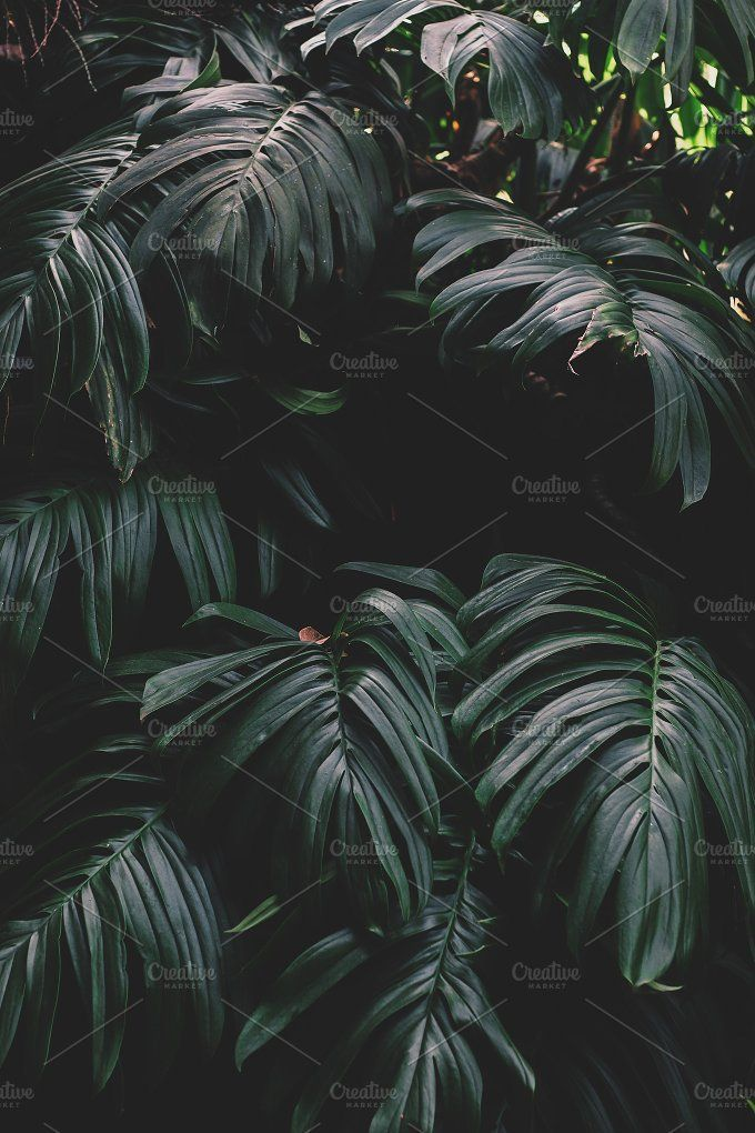 Dark Green Jungle Leaves Dark Green Aesthetic Nature Photography Jungle Photography Tropical rainforest plants that can be used in the garden to add color, diversity and charm. dark green jungle leaves dark green