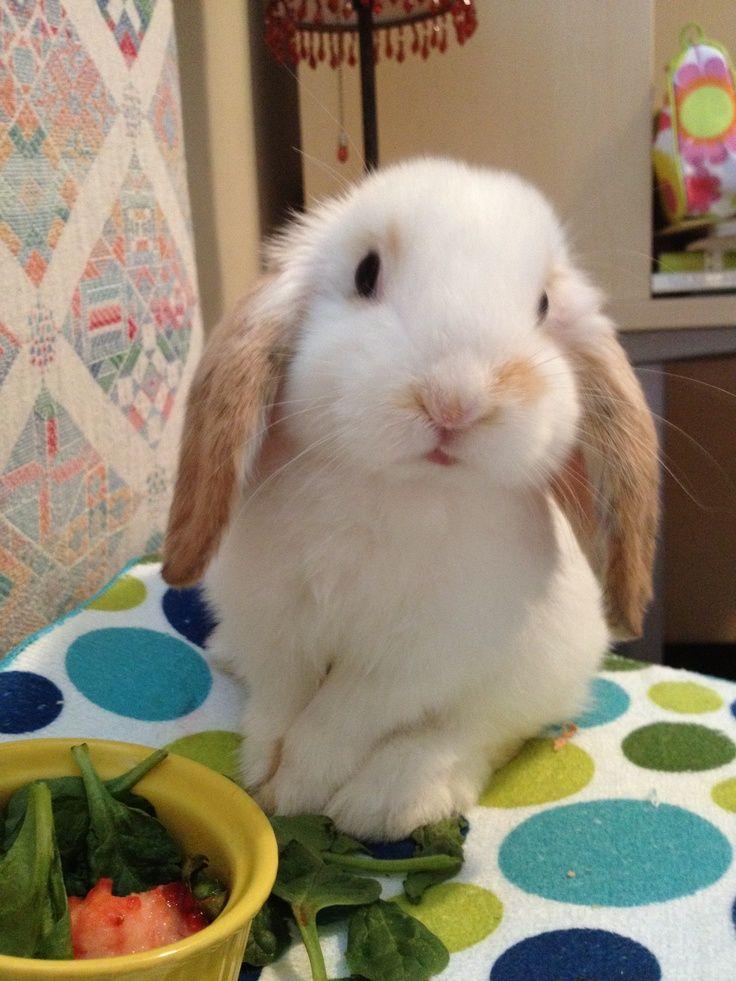 darling bunny
